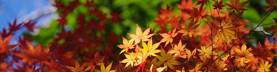 20180908_autumn.jpg